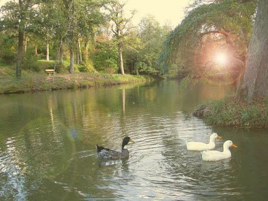 Atatürk Arboretumu Göller