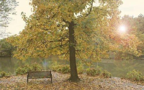 atatürk arboretumu hakkında merak edilenler